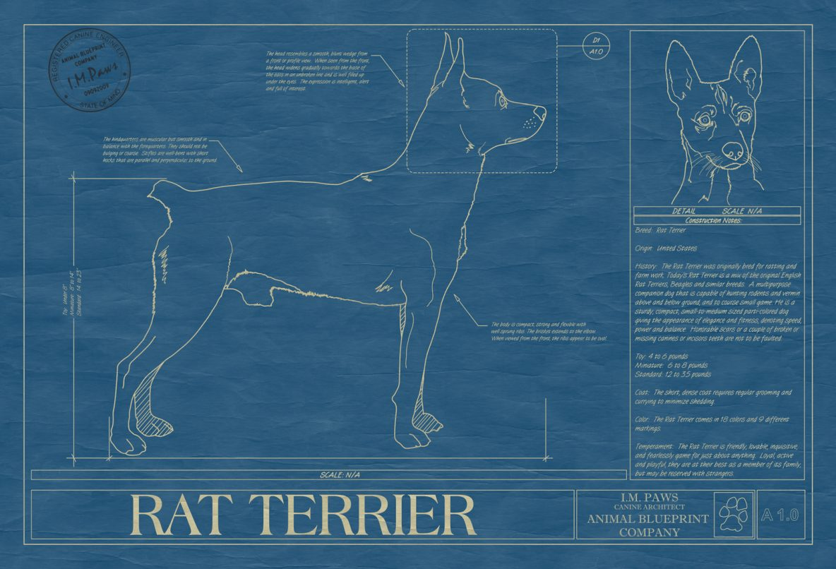 Rat Terrier Dog Blueprint