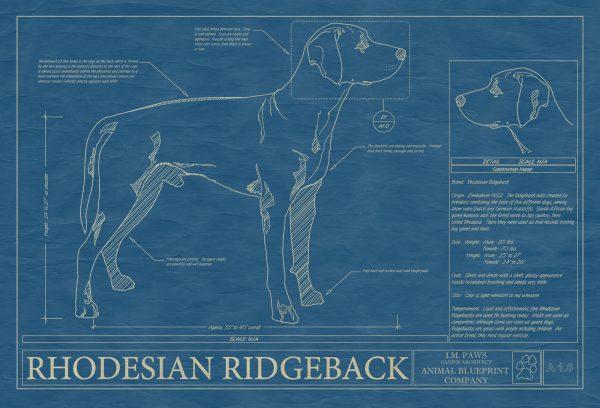 Rhodesian Ridgeback Dog Blueprint