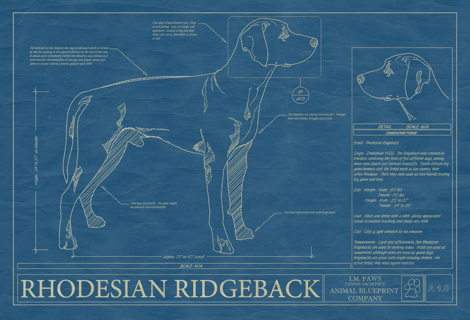 Rhodesian ridgeback animal blueprint company rhodesian ridgeback dog blueprint malvernweather Gallery