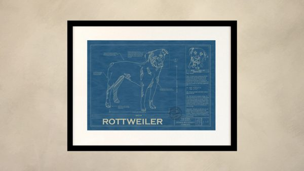 Rottweiler Dog Wall Blueprint