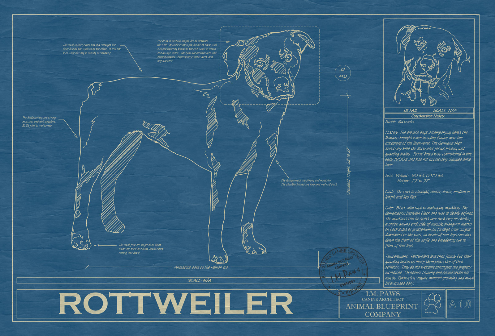 Rottweiler animal blueprint company rottweiler dog blueprint malvernweather Image collections