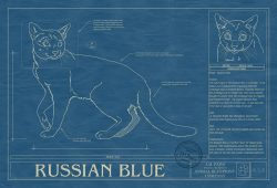 Russian Blue Cat Blueprint