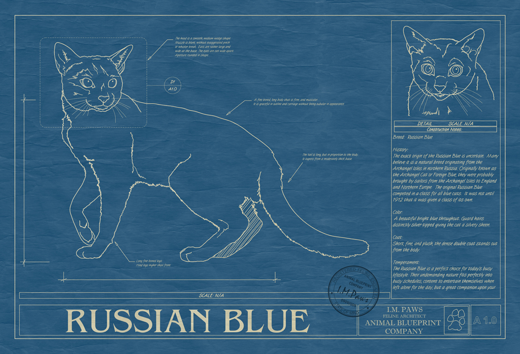 Russian blue animal blueprint company russian blue cat blueprint malvernweather Gallery