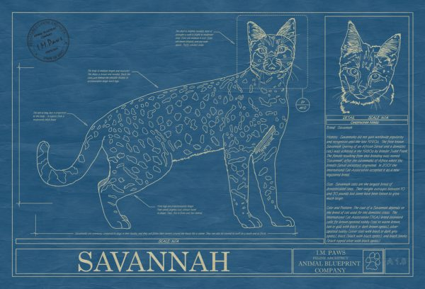 Savannah Cat Blueprint