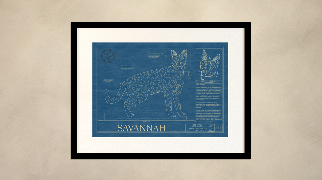Savannah animal blueprint company savannah cat wall blueprint malvernweather Choice Image