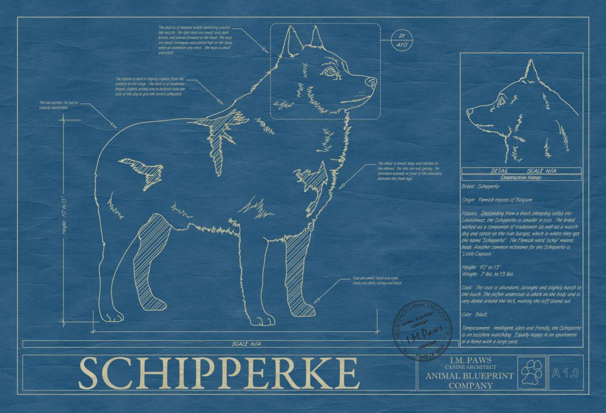 Schipperke Dog Blueprint