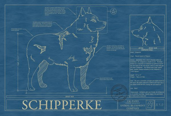 Schipperke Dog Blueprint