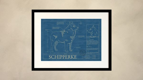 Schipperke Dog Wall Blueprint