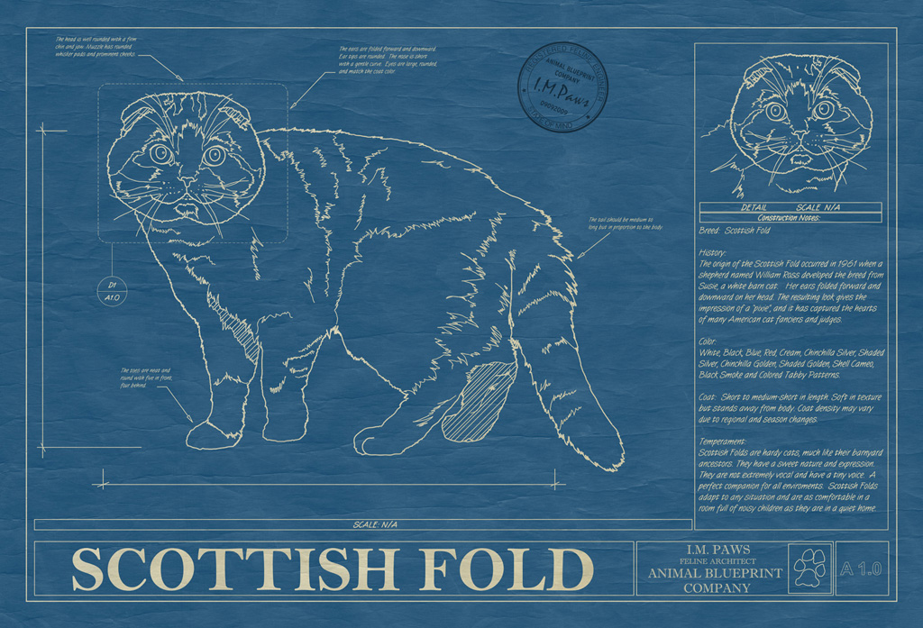 Scottish Fold Cat Blueprint