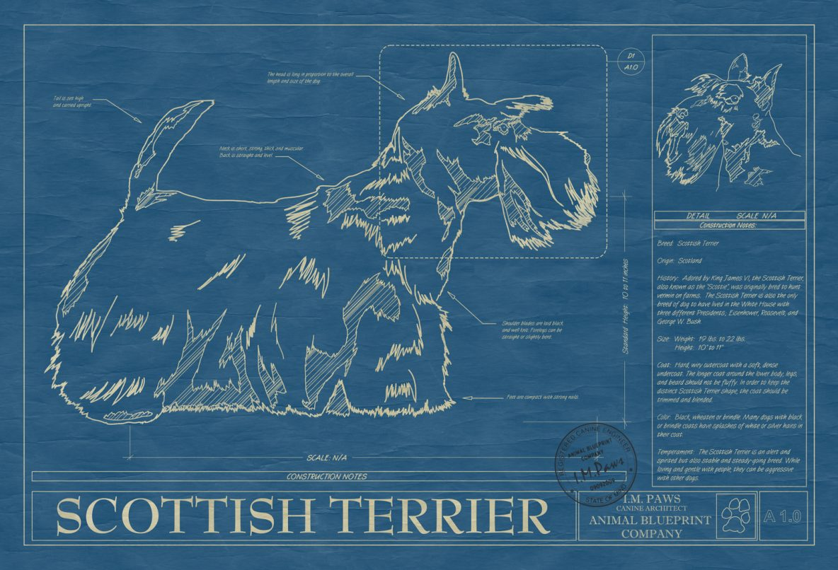 Scottish Terrier Dog Blueprint