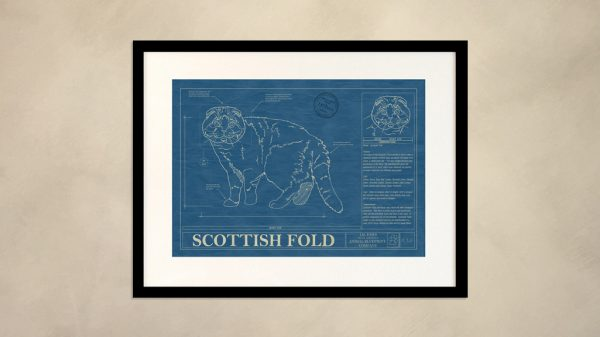 Scottish Fold Cat Wall Blueprint