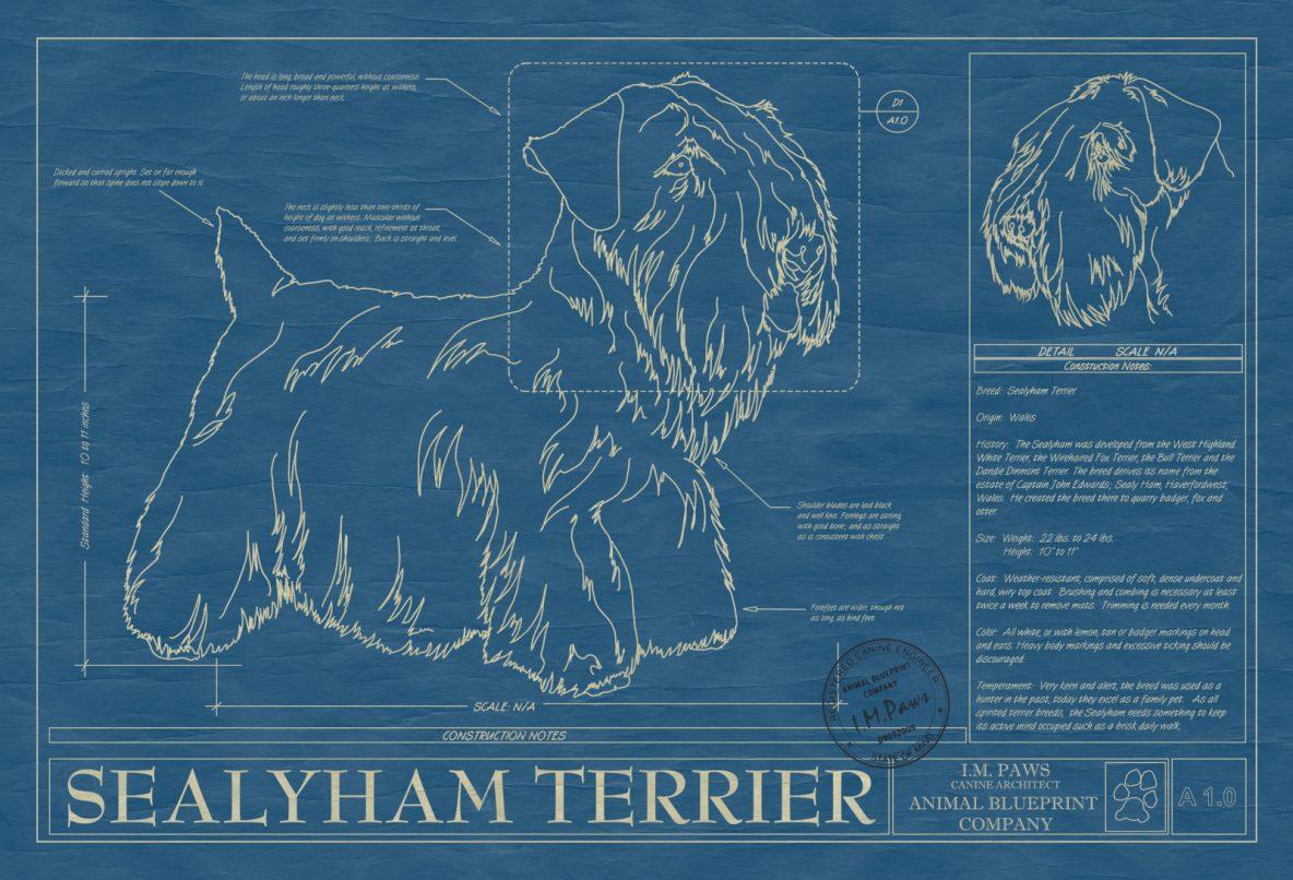 Sealyham Terrier Dog Blueprint