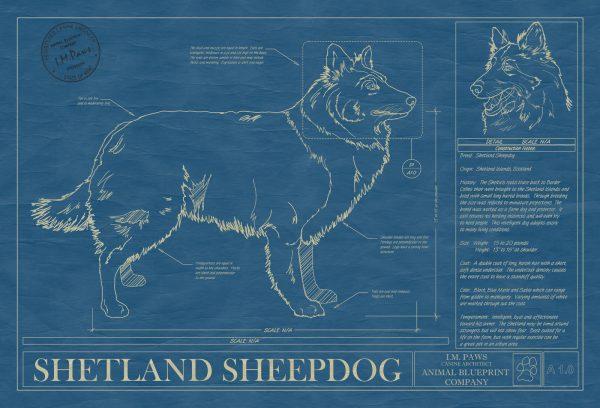 Shetland Sheepdog Dog Blueprint