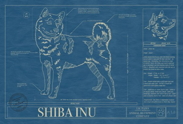 Shiba Inu Dog Blueprint