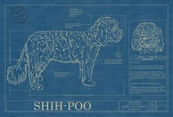 Shih-Poo Dog Blueprint