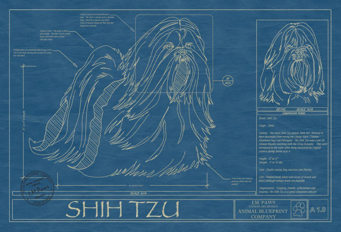 Shih Tzu Dog Blueprint