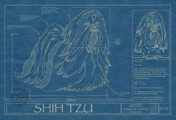 Shih Tzu Dog Blueprint