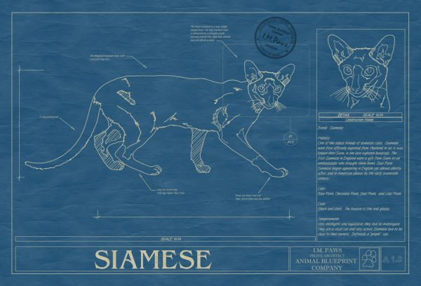 Siamese Cat Blueprint