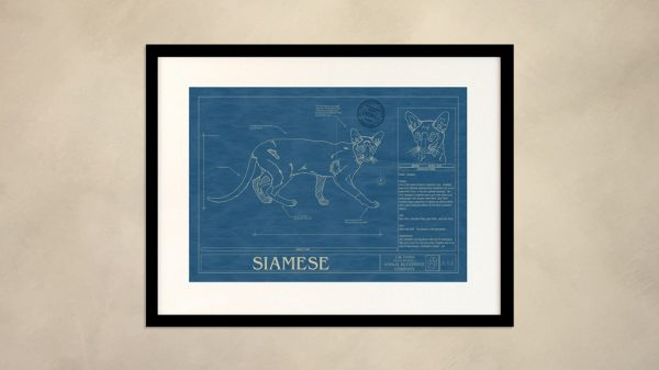 Siamese Cat Wall Blueprint