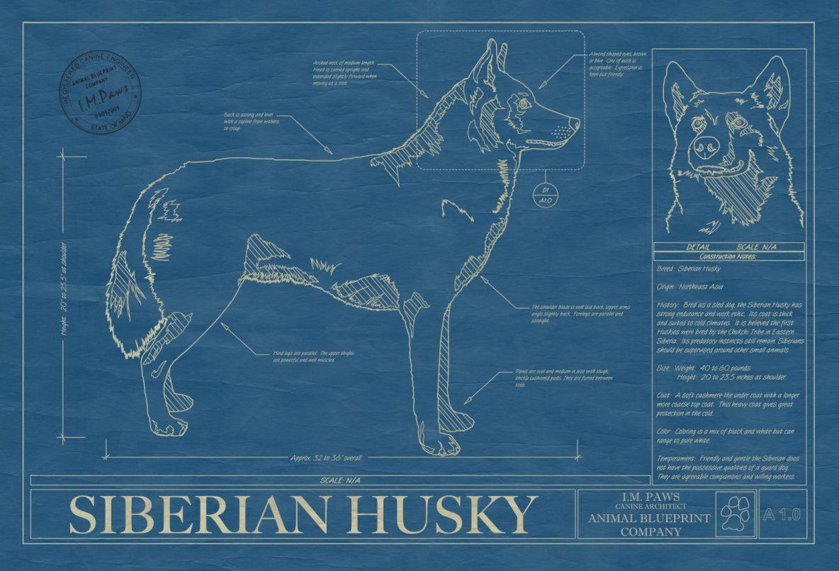 Siberian Husky Dog Blueprint