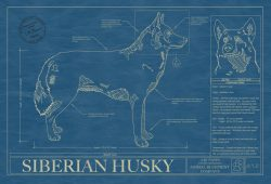 Siberian Husky Dog Blueprint