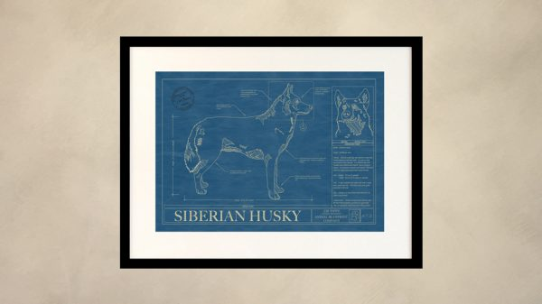 Siberian Husky Dog Wall Blueprint