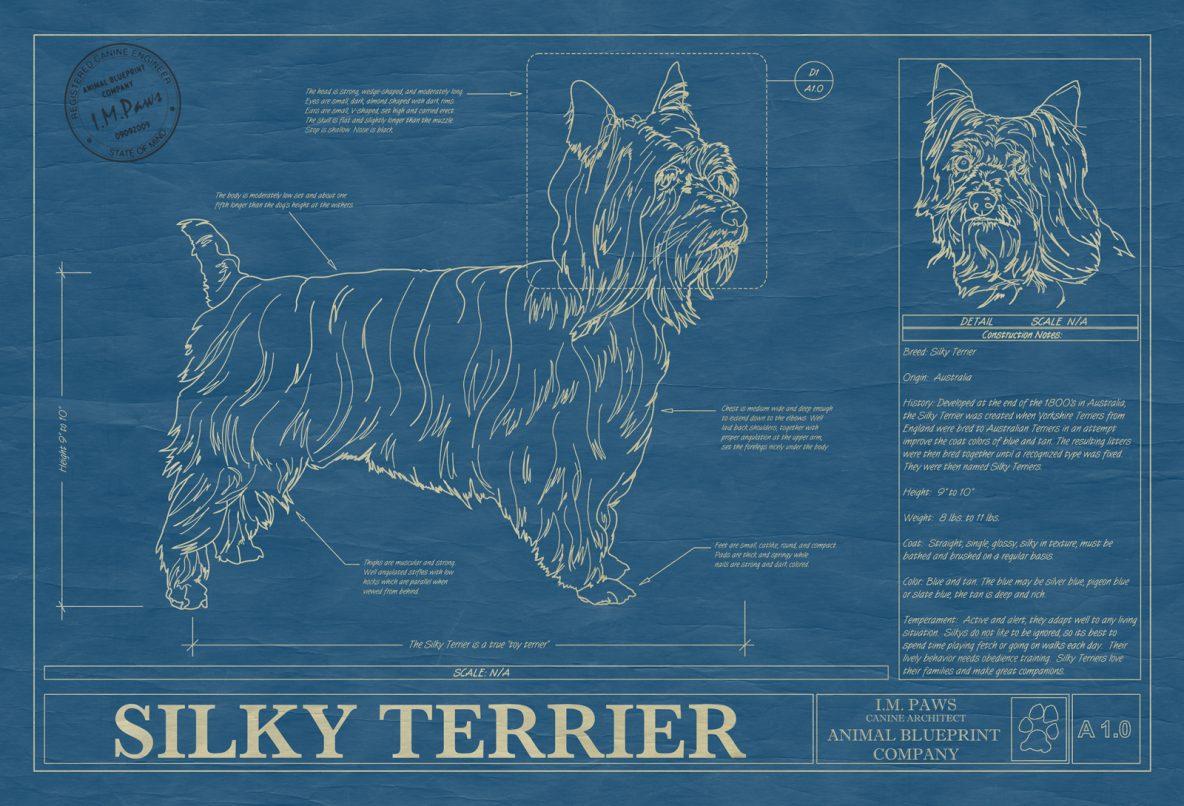 Silky Terrier Dog Blueprint