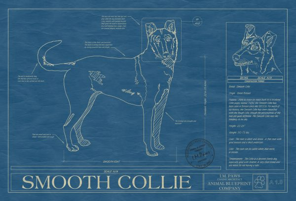 Smooth Collie Dog Blueprint