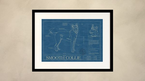 Smooth Collie Dog Wall Blueprint