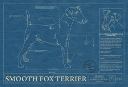Smooth Fox Terrier Dog Blueprint