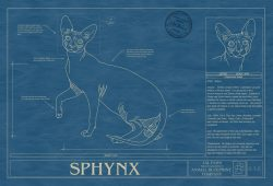Sphynx Cat Blueprint