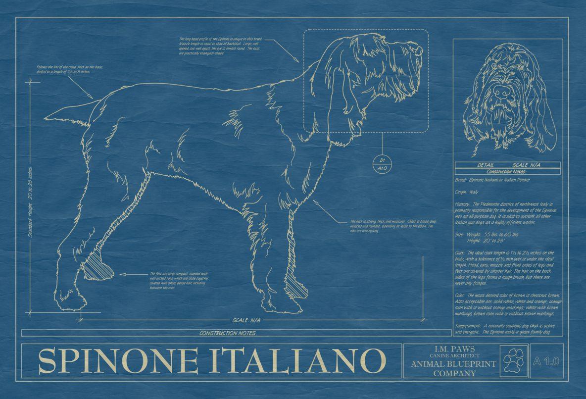 Spinone Italiano Dog Blueprint