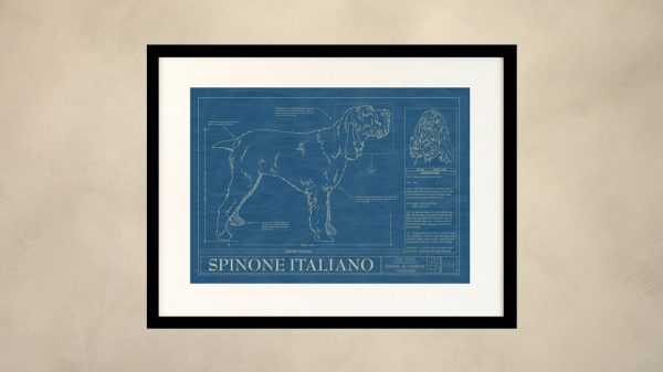 Spinone Italiano Dog Wall Blueprint