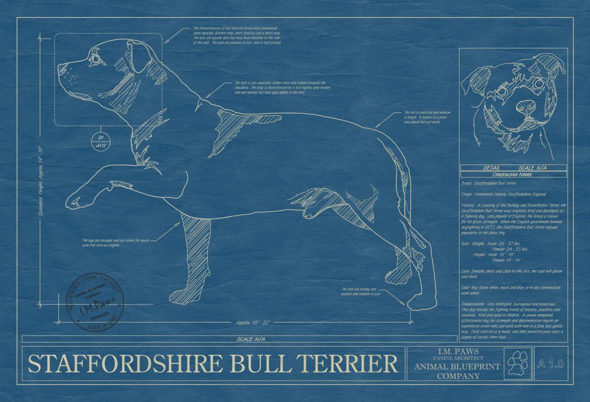 Staffordshire Bull Terrier Dog Blueprint
