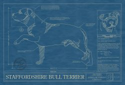Staffordshire Bull Terrier Dog Blueprint