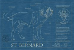 Saint Bernard Dog Blueprint