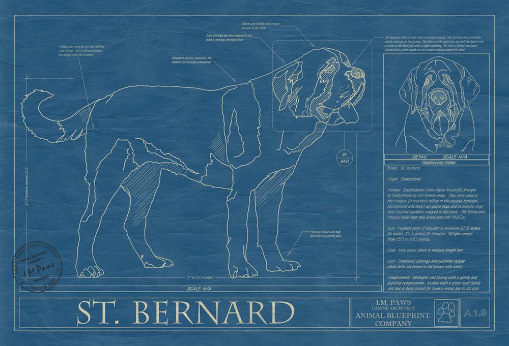 Saint Bernard Dog Blueprint