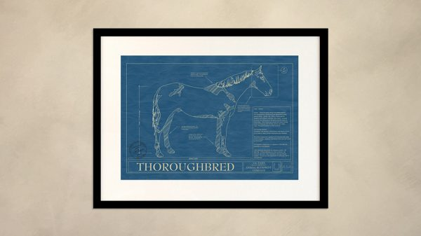 Thoroughbred Horse Wall Blueprint