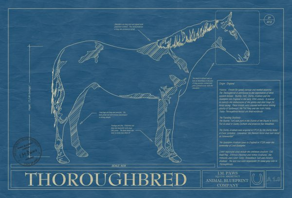 Thoroughbred Horse Blueprint
