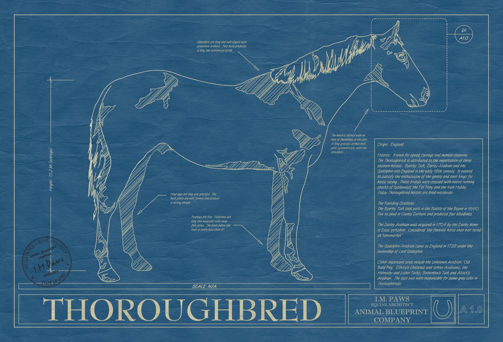 Thoroughbred horse animal blueprint company thoroughbred horse blueprint malvernweather Choice Image