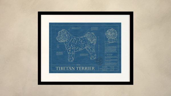 Tibetan Terrier Dog Wall Blueprint