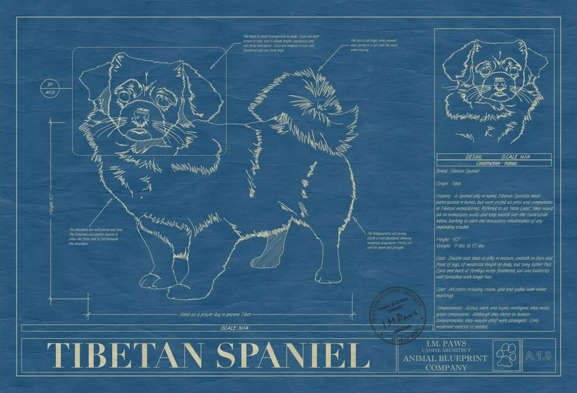 Tibetan Spaniel Dog Blueprint