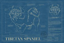 Tibetan Spaniel Dog Blueprint