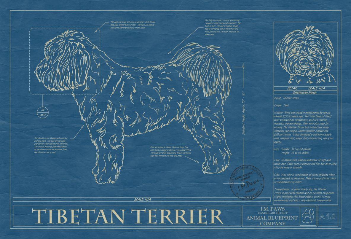 Tibetan Terrier Dog Blueprint