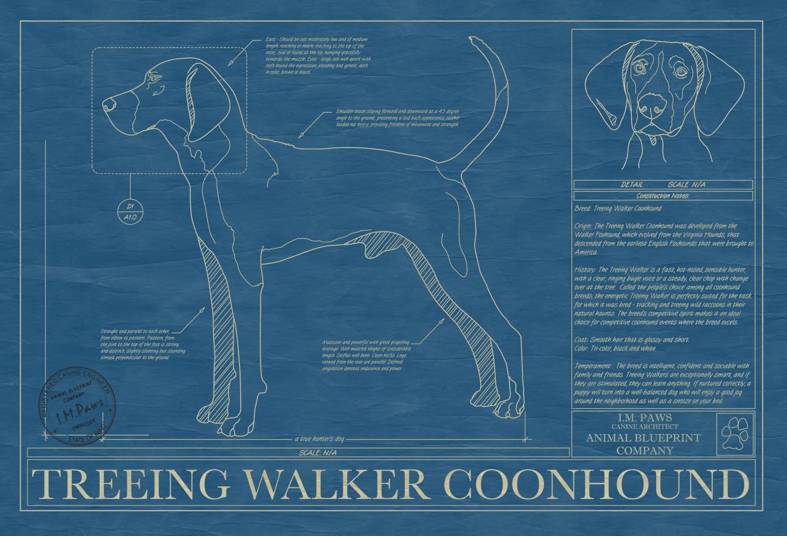 Treeing walker coonhound animal blueprint company treeing walker coonhound dog blueprint malvernweather Images