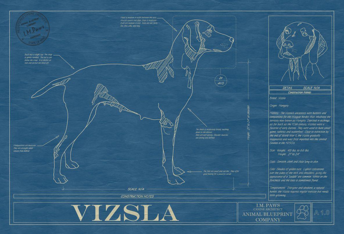 Vizsla Dog Blueprint