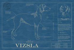Vizsla Dog Blueprint