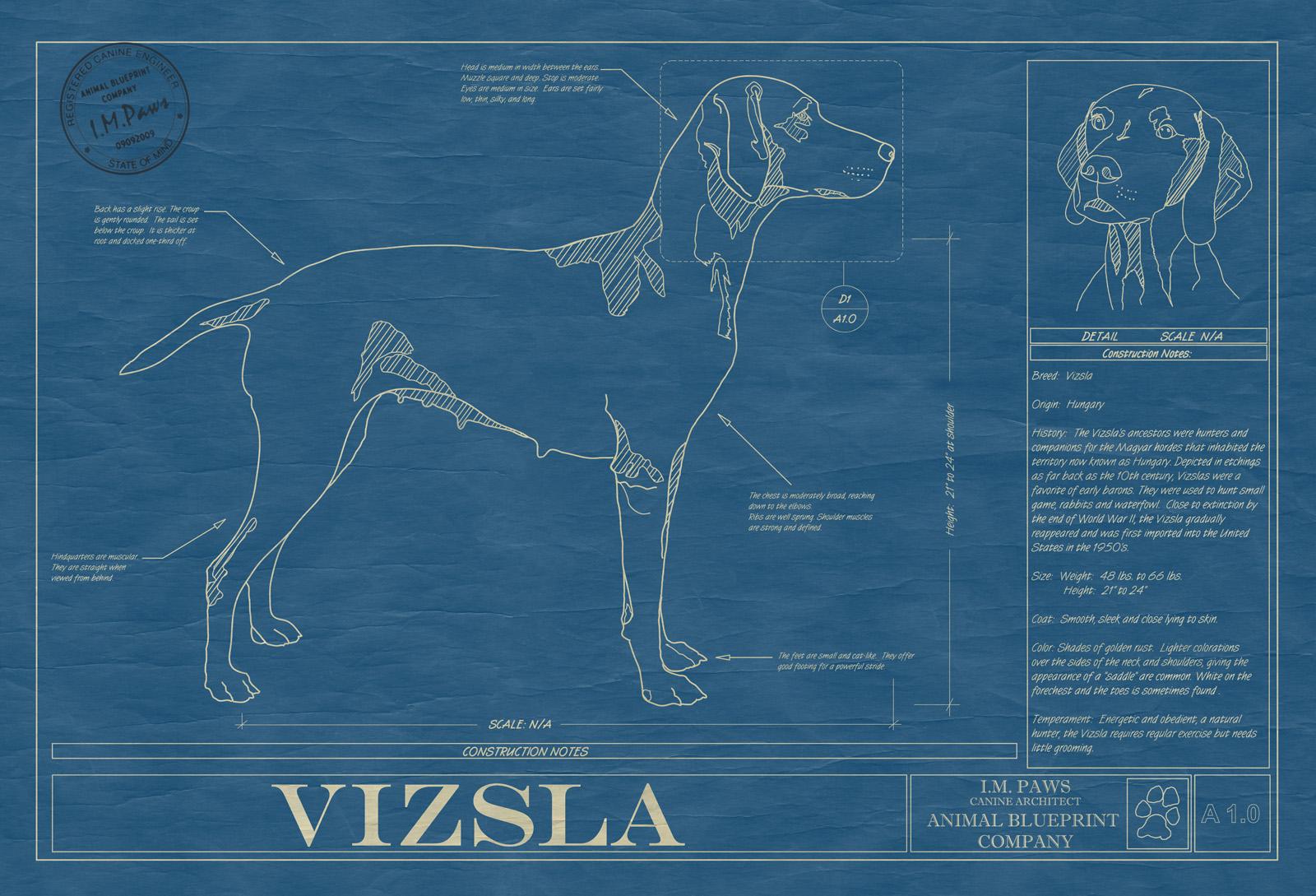 Vizsla animal blueprint company vizsla dog blueprint malvernweather Choice Image