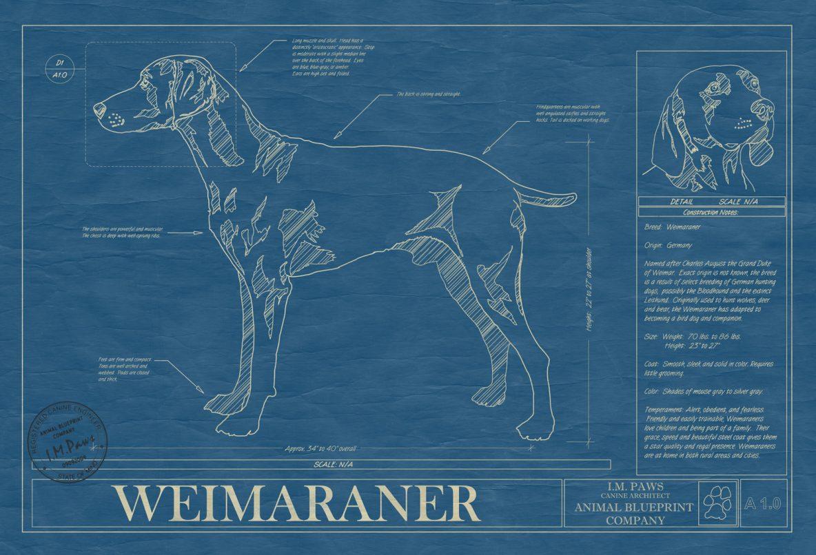 Weimaraner Dog Blueprint