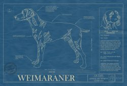Weimaraner Dog Blueprint